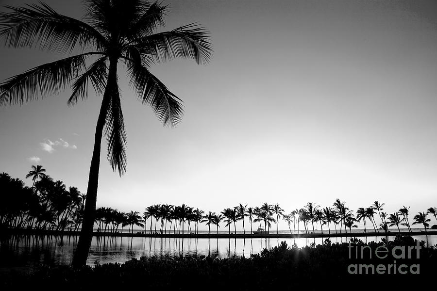 Beaches Photograph - Anaehoomalu Beach From The Grass by Greg Clure