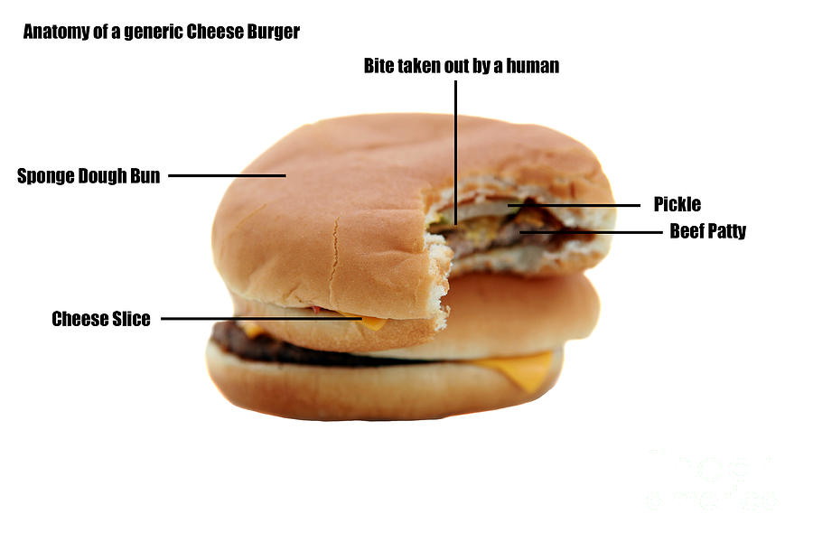 Addictive Photograph - Anatomy Of A Generic Cheese Burger by Michael Ledray
