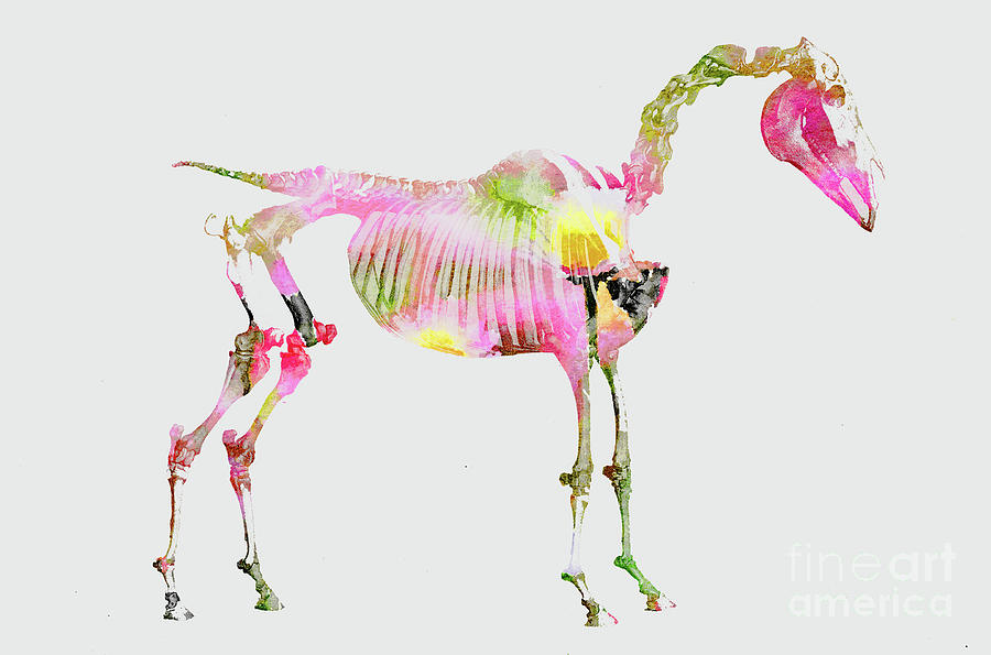 Anatomy Of A Horse Mixed Media by Ann Leech