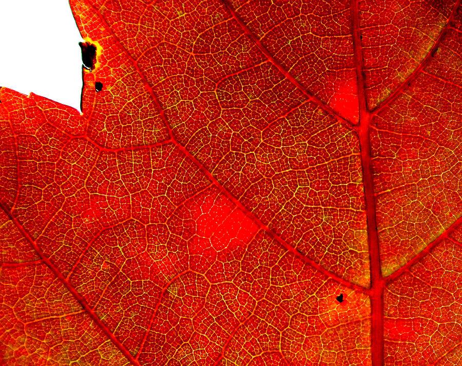 Anatomy of a Leaf by Rick Macomber