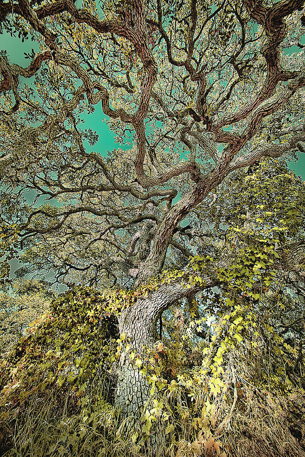 Tree Digital Art - Ancient History by Annie Omens