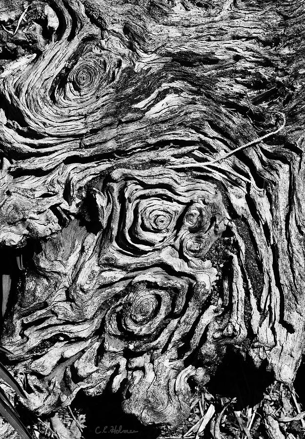 Tree Photograph - Ancient Stump by Christopher Holmes