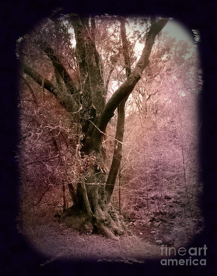 Windy Hill Photograph - Ancient Tree By A Stream by Laura Iverson