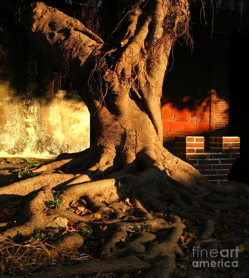 Ancient Photograph - Ancient Tree In A Chinese Courtyard by Yali Shi