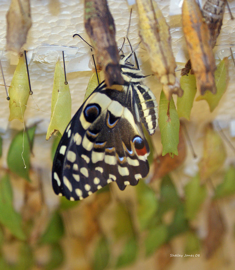 Butterfly Photograph - And life begins by Shelley Jones