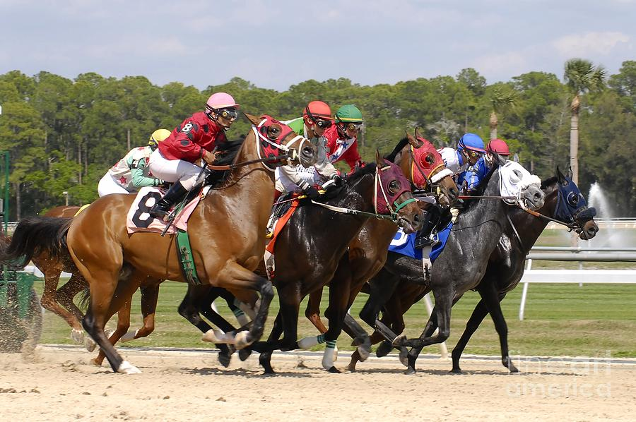 Horse Racing Photograph - And Their Off by David Lee Thompson