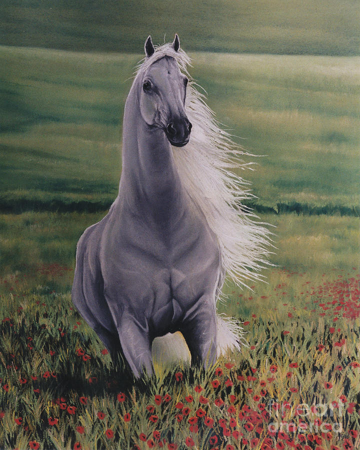 White Horse Pastel - Andalusian Spirit by Louise Green