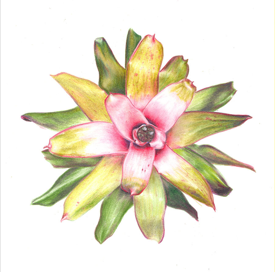 Bromeliad Painting - Andreas Choice by Penrith Goff
