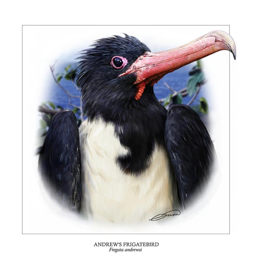 Frigatebird Digital Art - Andrews Frigatebird Fregata Andrewsi 2 by Owen Bell