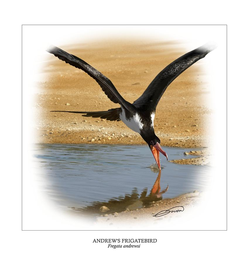 Frigatebird Digital Art - Andrews Frigatebird Fregata Andrewsi 4 by Owen Bell