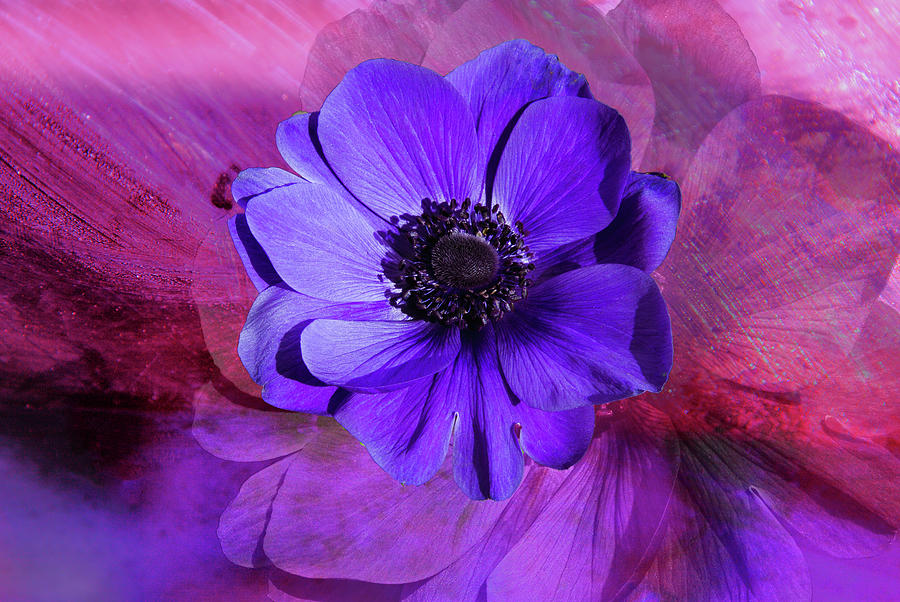 Anemone Digital Art - Anemone In Purple by Terry Davis