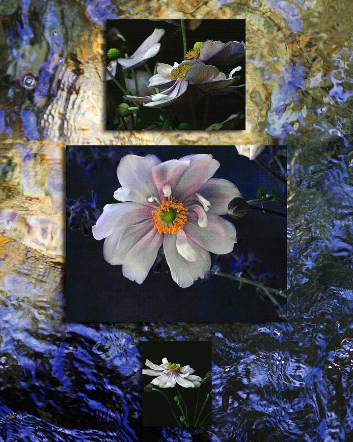 Floral Photograph - Anemone Medley I by D Kadah Tanaka
