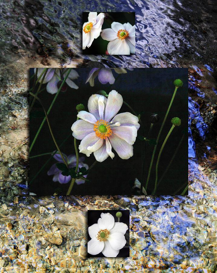 Floral Photograph - Anemone Medley II by D Kadah Tanaka