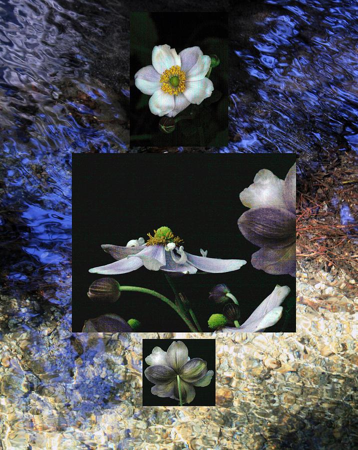 Floral Photograph - Anemone Medley IIi by D Kadah Tanaka