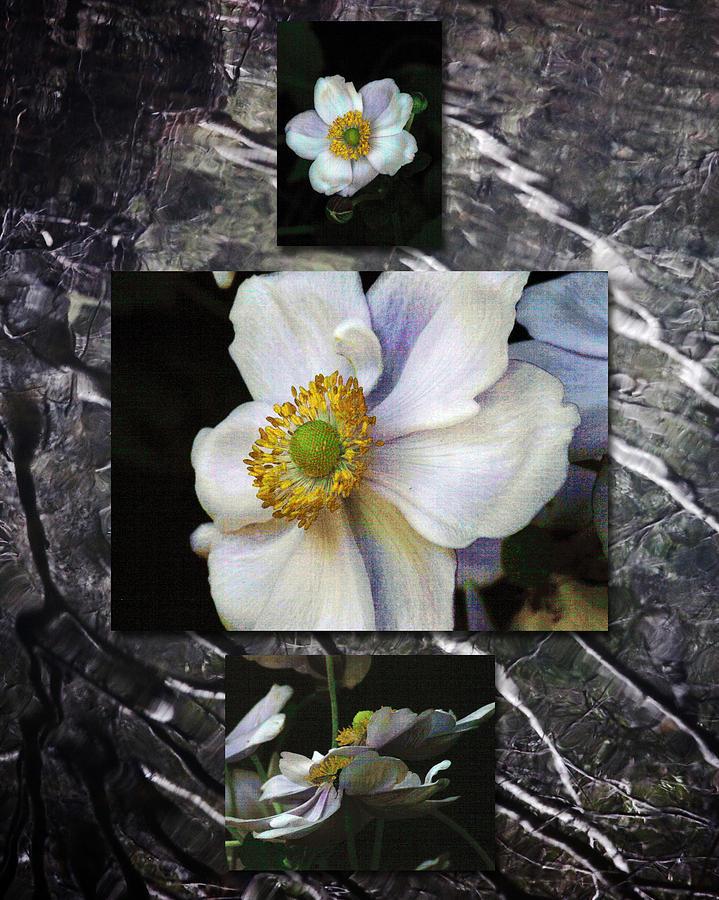Floral Photograph - Anemone Medley X by D Kadah Tanaka