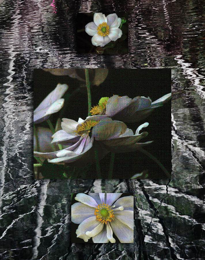 Floral Photograph - Anemone Medley Xii by D Kadah Tanaka