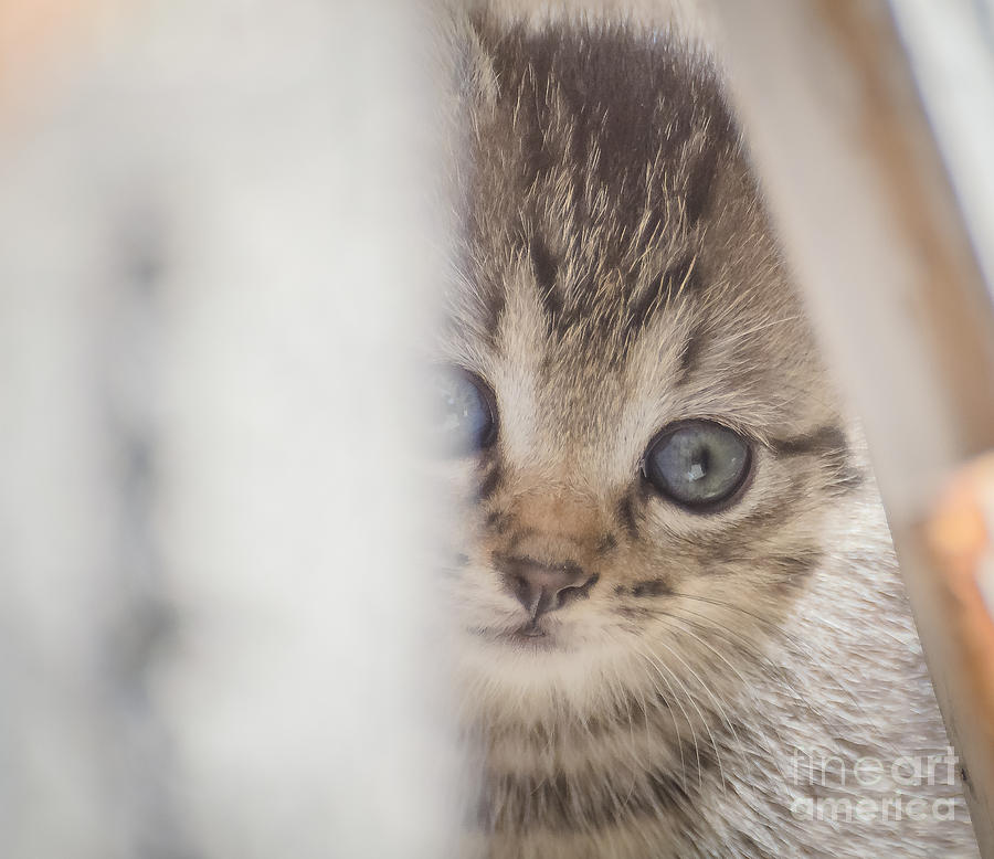 Kitten Photograph - Angel Came To You  by Lyudmila Prokopenko