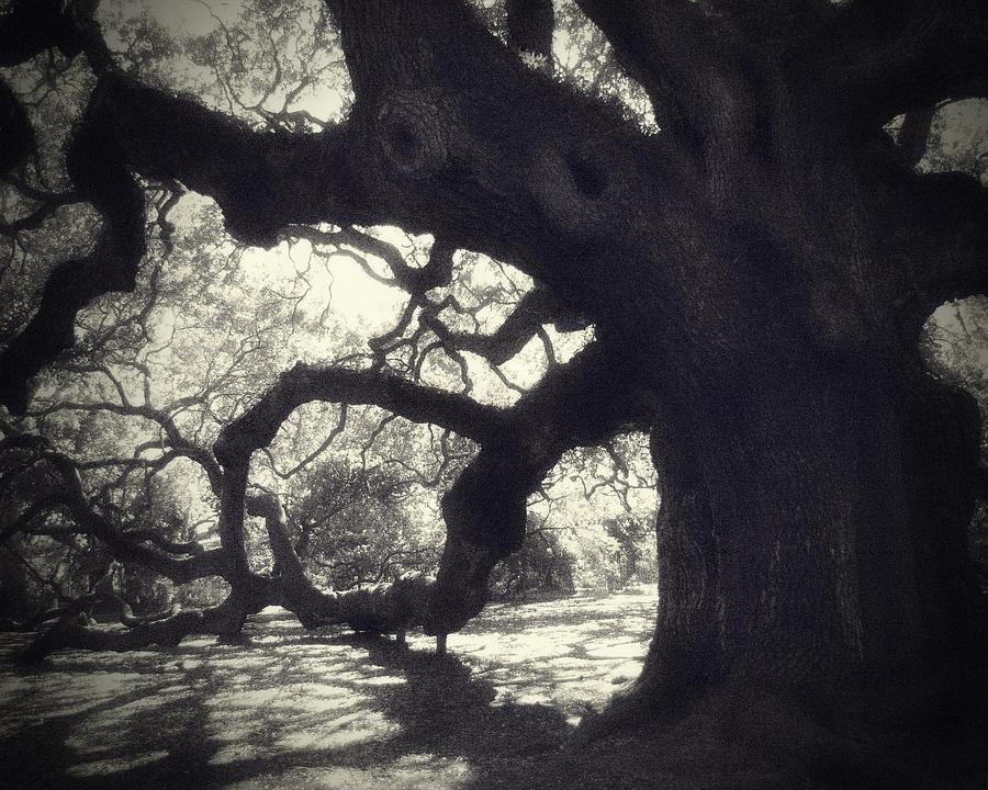 Angel Oak Photograph - Angel II by Amy Tyler