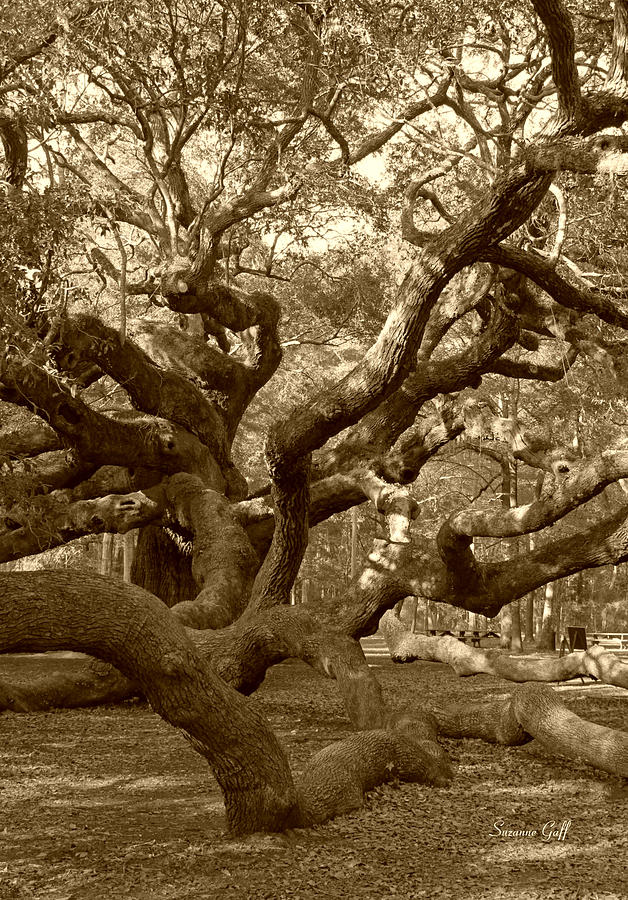 Sepia Photograph - Angel Oak In Sepia by Suzanne Gaff