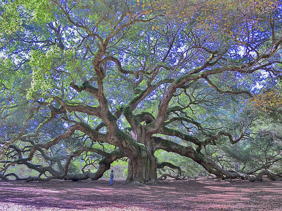 Angel Oak Photograph - Angel Oak, Johns Island, Sc by Garry Turpin