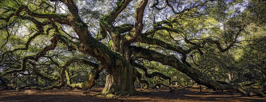 Angel Oak by Michael Donahue