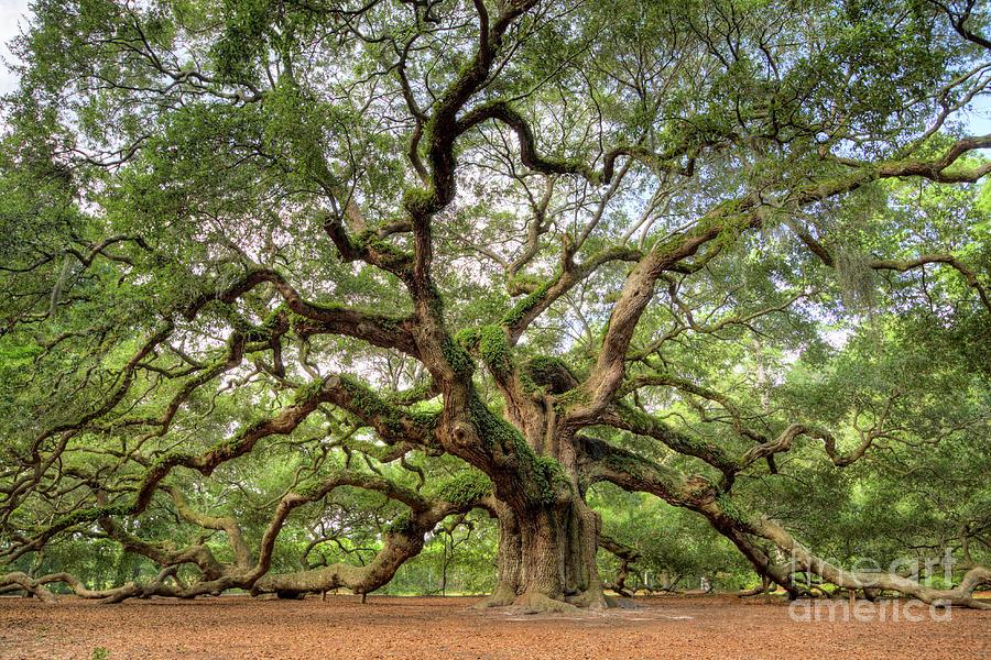 Angel Oak Tree Photograph - Angel Oak Tree Of Life by Dustin K Ryan