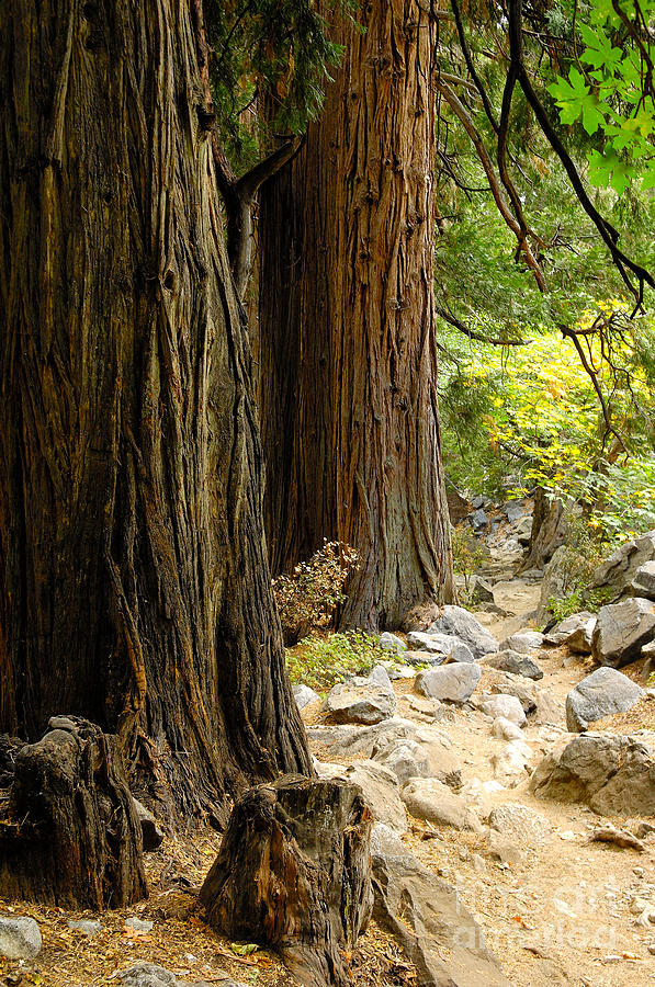 Tree Photograph - Angel Trail by Marian Kraus
