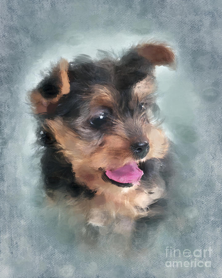 Yorkie Photograph - Angelic by Betty LaRue