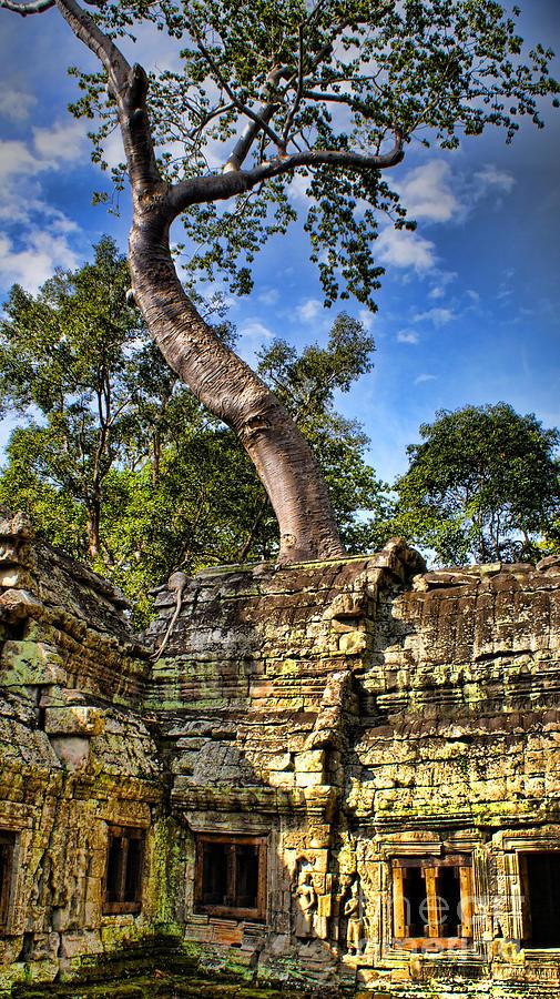 Angkor Painting - Angkor Wat And Tree by Louise Fahy