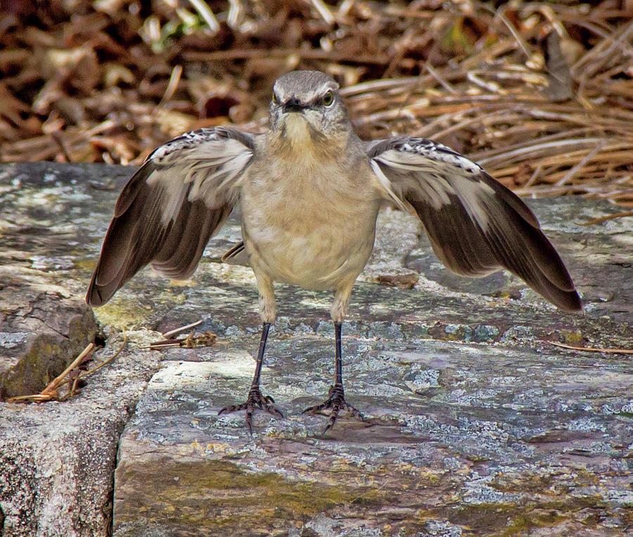 Angry Bird by Angel Sharum