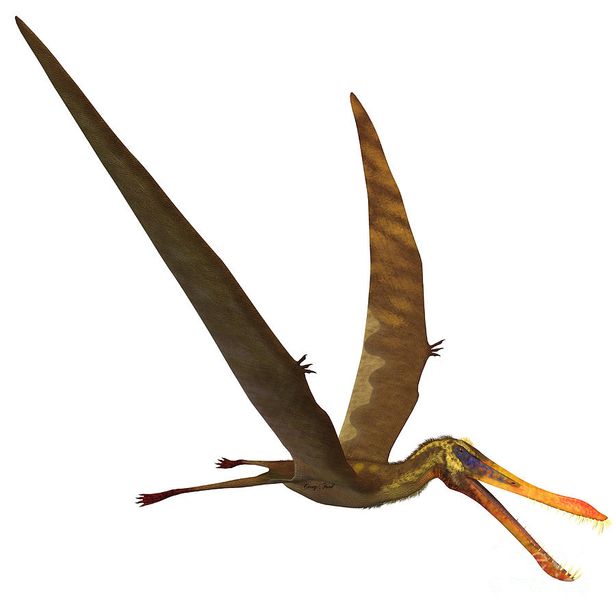 Anhanguera Painting - Anhanguera Pterosaur by Corey Ford