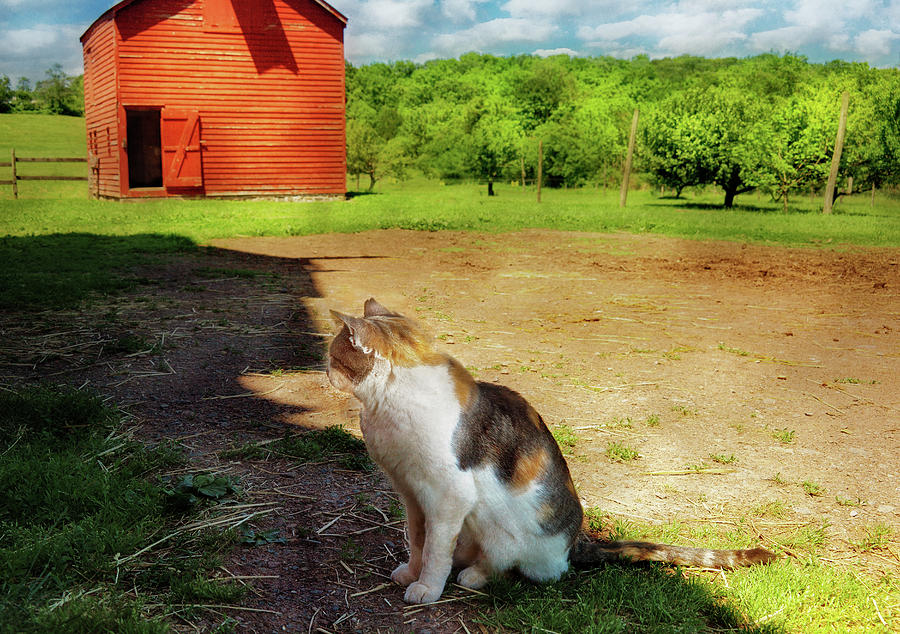 Savad Photograph - Animal - Cat - The Mouser by Mike Savad