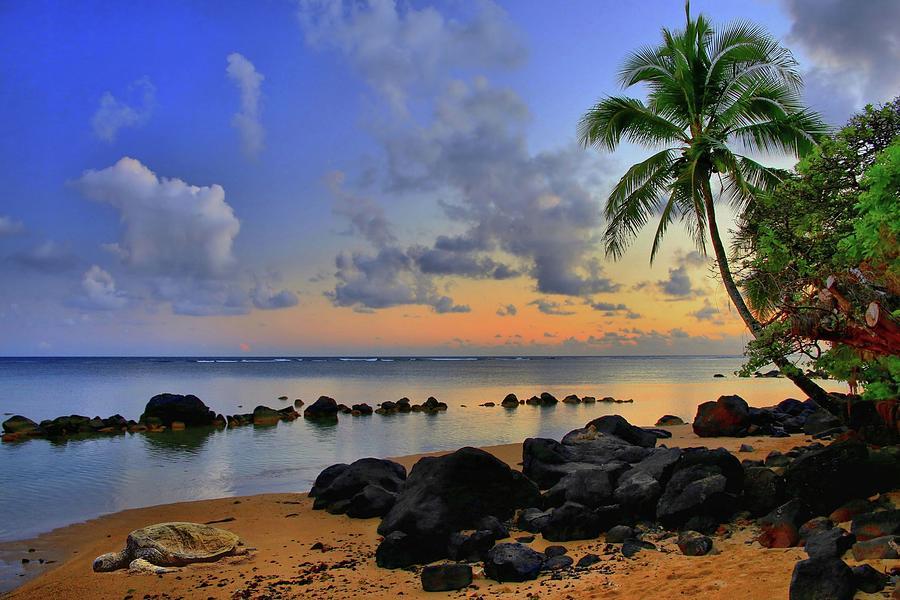 Anini Beach Honu by DJ Florek
