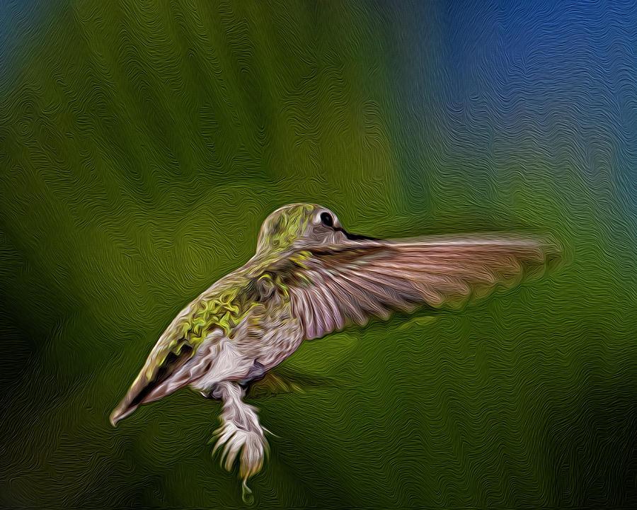 Annas Hummingbird Op54 Digital Art