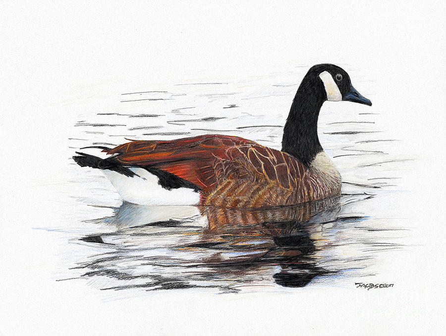 Goose Drawing - Annie Belle by Kevin Scott Jacobs