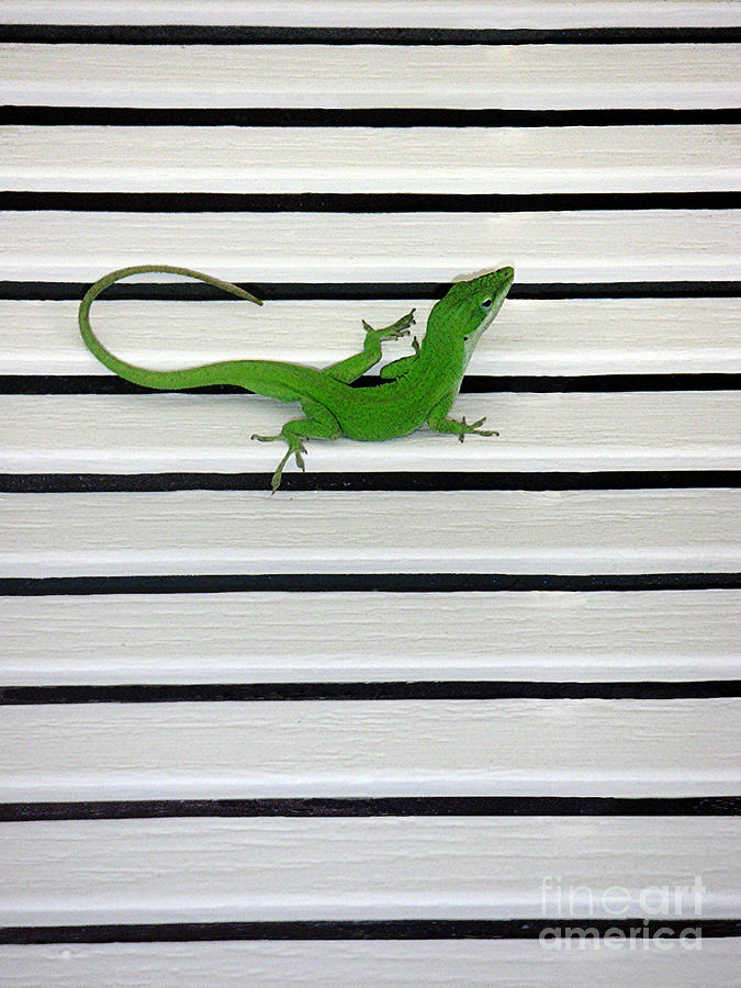 Nature Photograph - Anole Shuttered Out by Lucyna A M Green