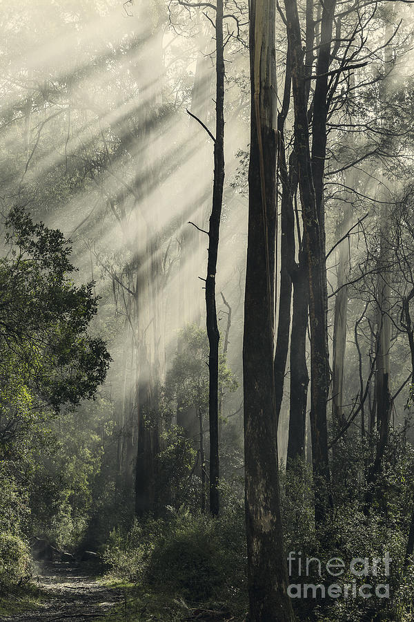 Light Photograph - Anothen by Andrew Paranavitana
