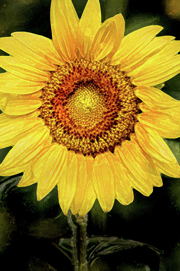 Artistic Sunflower Images