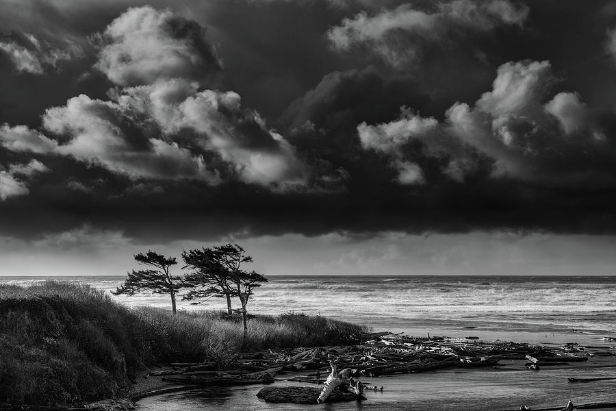 Another Day at Kalaloch Beach by Dan Mihai