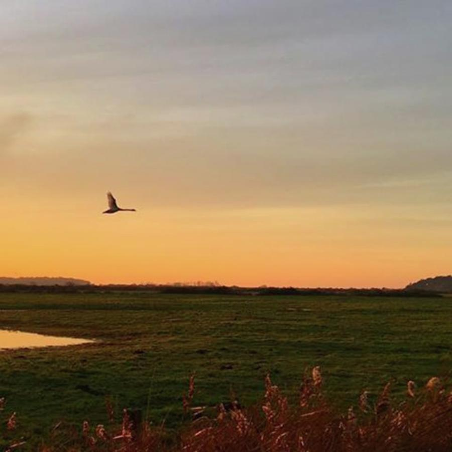 Nature Photograph - Another Iphone Shot Of The Swan Flying by John Edwards