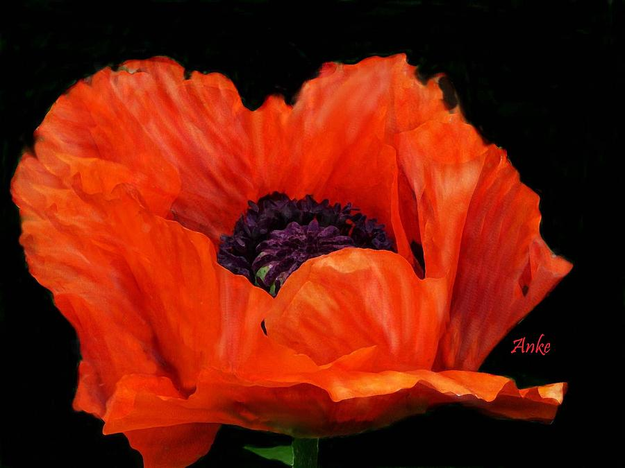 Flower Painting - Another Red Poppy by Anke Wheeler