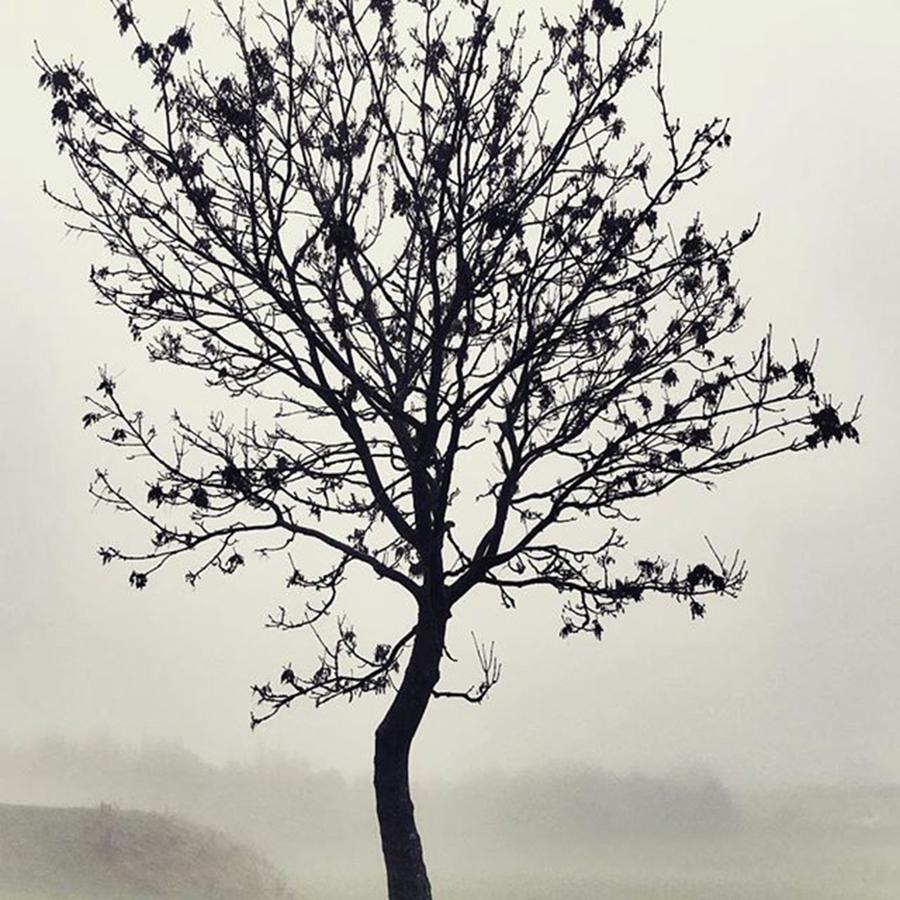 Tree Photograph - Another Walk Through The by John Edwards