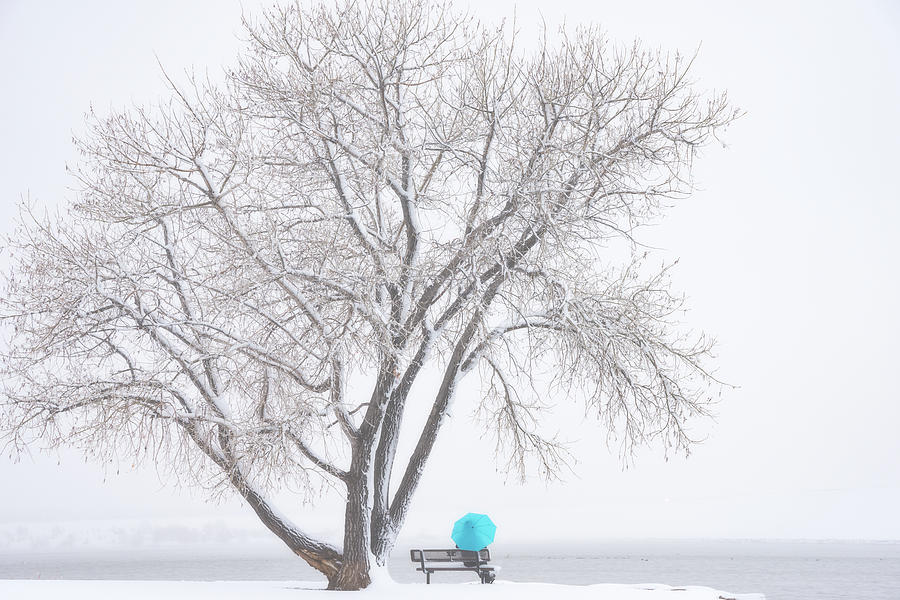 Another Winter Alone Photograph