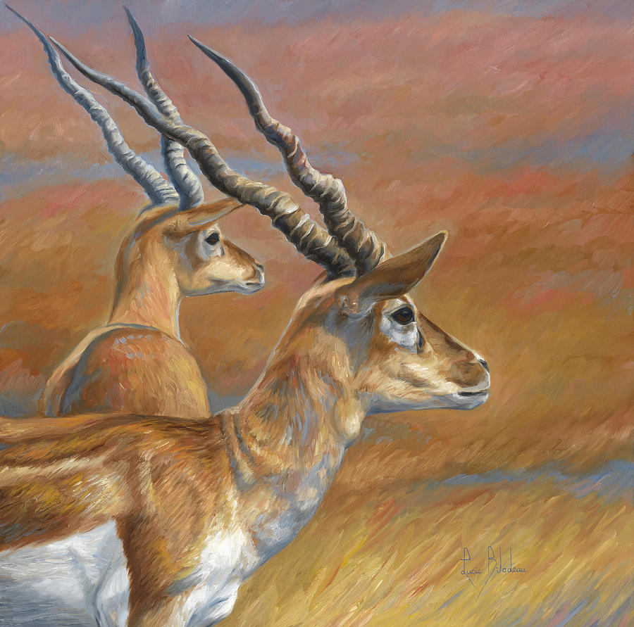 Antelopes Painting By Lucie Bilodeau