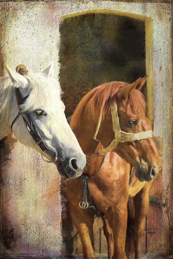 Horses Digital Art - Anticipation by Colleen Taylor