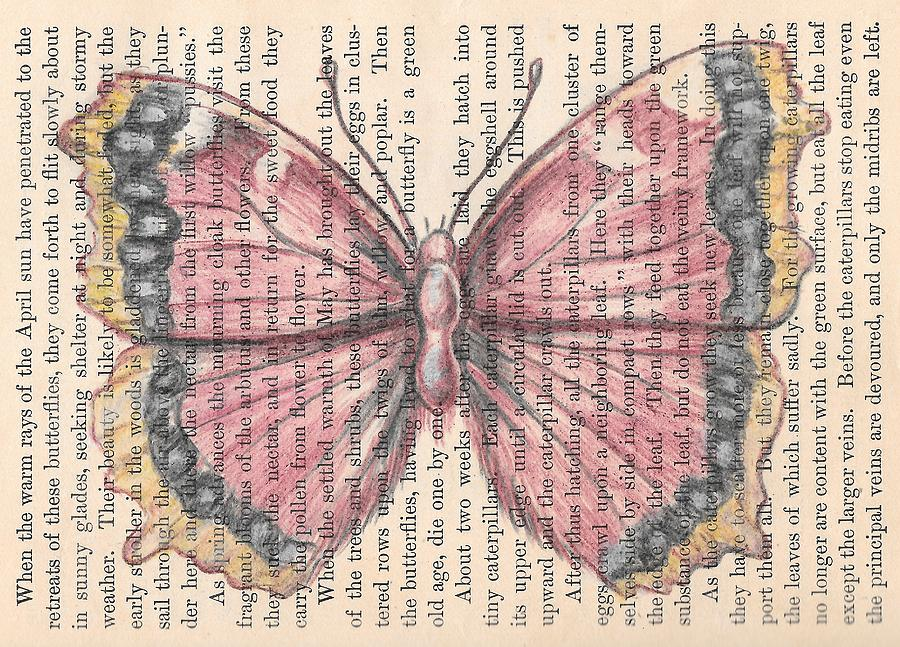 Butterfly Drawing - Antiopa by Kathy Weidner