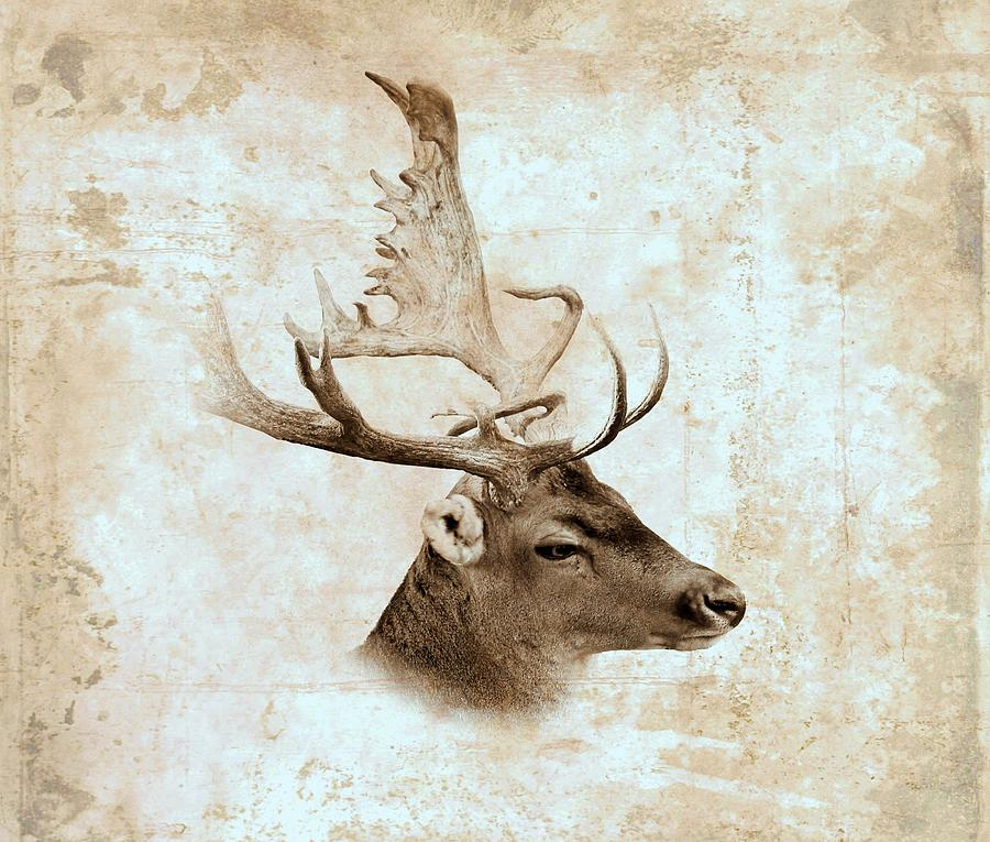 Deer Digital Art - Antique Deer by Lucie Dumas