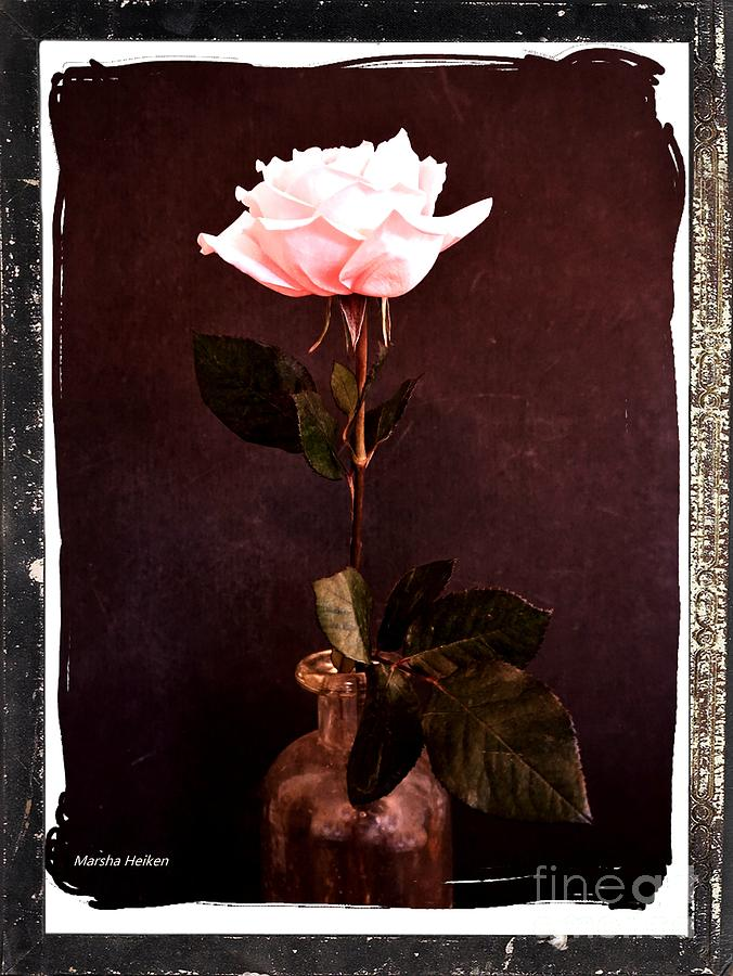 Photo Photograph - Antique Pink Rose by Marsha Heiken