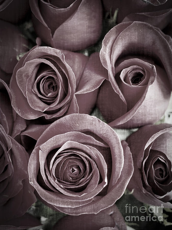 Roses Photograph - Antique Roses by Edward Fielding