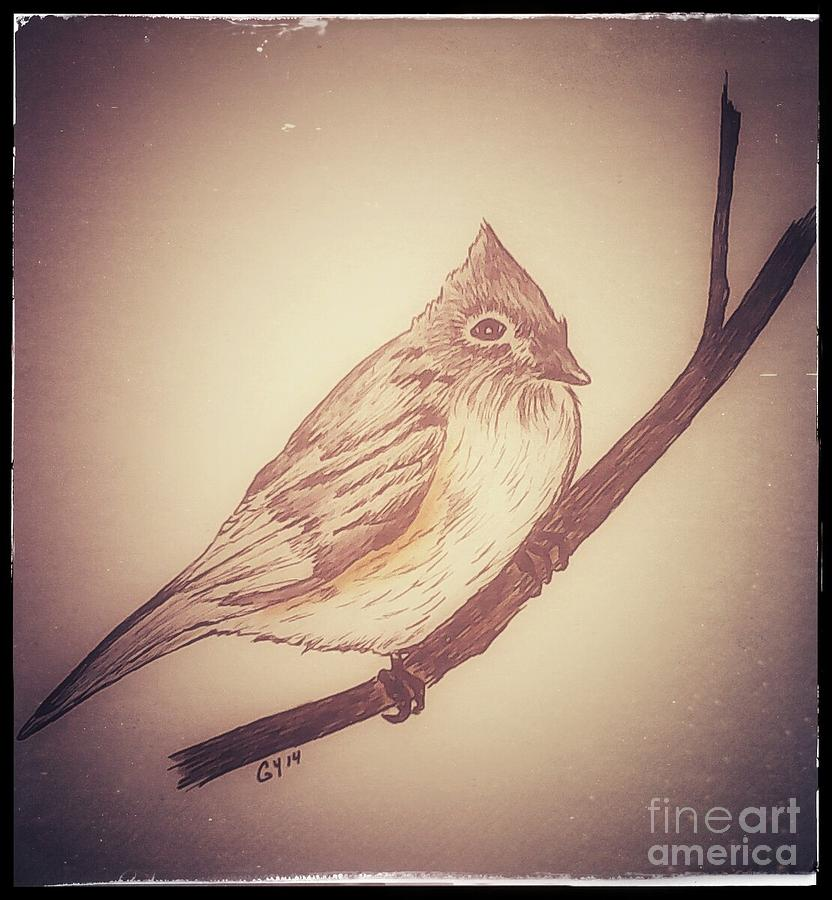 Antique Bird Drawing - Antique Titmouse by Ginny Youngblood